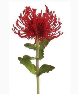 Pin Cushion Protea (Red)