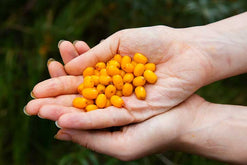 Top 6 Benefits of Sea Buckthorn Oil