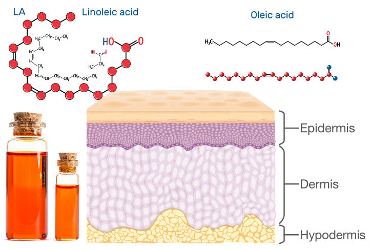 Why are Linoleic and Oleic Acid Important and How to Use Them?