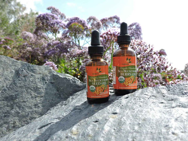 I also use the Sea Buckthorn Berry Oil topically. I have been so impressed with how it makes my hair and skin feel and look. The berry oil is bright orange, so I do have to be careful when applying it. Occasionally, I develop psoriasis patches and I use the berry oil to help clear up the blemishes and ensure there is no scarring. This is a major benefit for me because I do not have to use a prescription. I also used the berry oil during and after my pregnancy to minimize the appearance and long term scarring from stretch marks.  Click Here to Learn More About Sea Buckthorn and Psoriasis