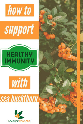 Supporting a healthy immune system is something you should think about before you even get sick. The best way to keep your immune system strong is to eat a healthy diet, exercise, and include nutrient rich superfoods like sea buckthorn oil.  Sea buckthorn oil is an amazing option for daily immune support because of its vast pool of antioxidants, omega fatty acids, and other bioactive nutrients.