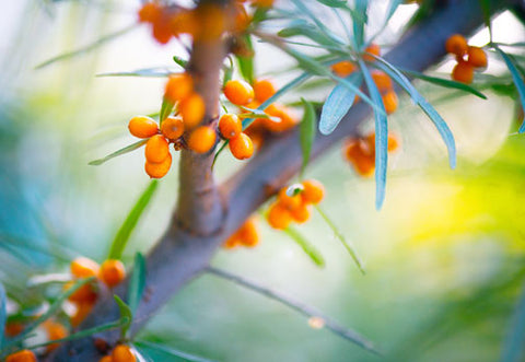Our sea buckthorn is grown sustainably