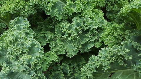 Kale one of many seasonal foods by seabuckwonders