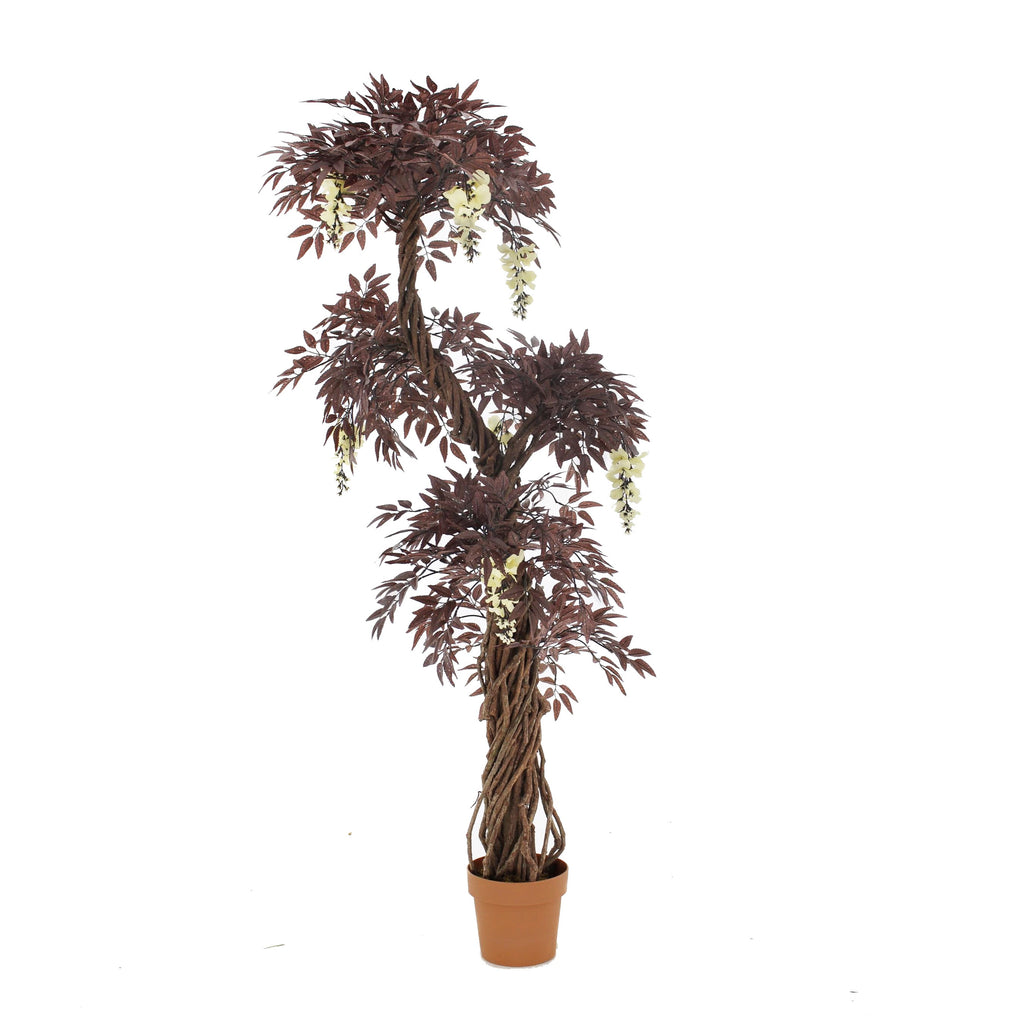 Cream Flowering Burgundy / Rustic Red Japanese Fruticosa Tree
