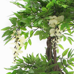 Cream Flowering Japanese Fruticosa Tree