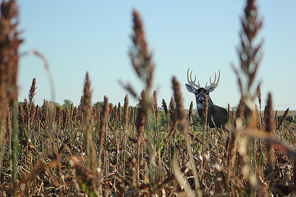 Standing Crops: A Bowhunter's Friend or Foe