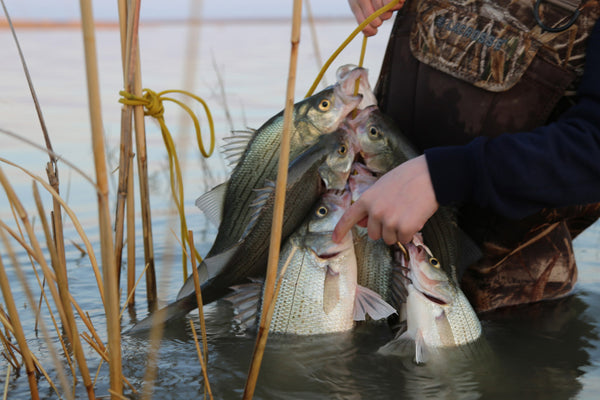 whitebass fishing, bucktail jigs, using deer tails to catch fish