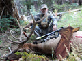 Heads Up Cow Elk Decoy for bow hunting elk