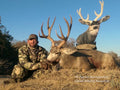 Giant mule deer buck with Heads Up Decoy
