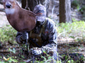 Hunting rutting whitetail deer with a decoy