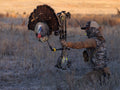 bow mountable fanning turkey decoy heads up decoy