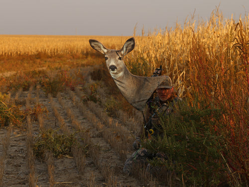 Heads Up Decoy Mule Deer Doe for bow hunting spot and stalk mule deer