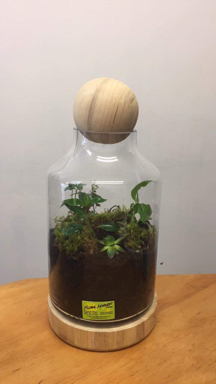 Terrariums - medium arrangement