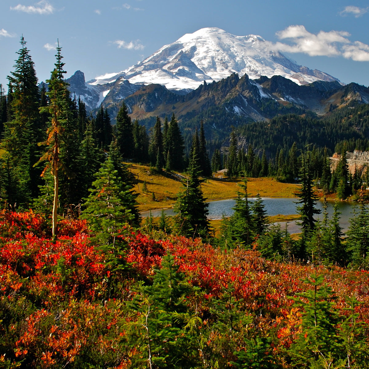 Quick Guide to Mount Rainier National Park