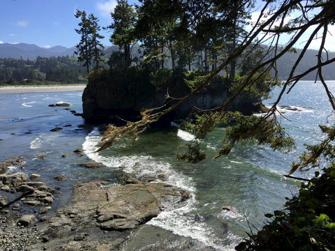 Forested coastal beach along the Olympic Peninsula.