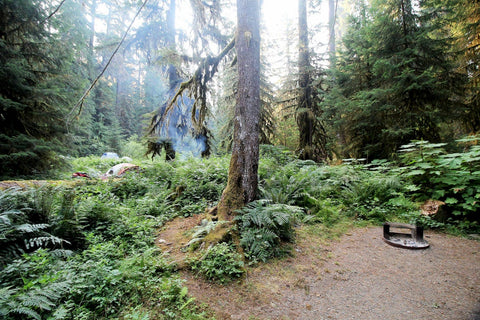 Misty green forest of Olympic National Park campground.