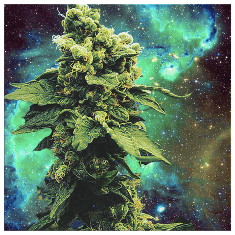 Space Cannabis Marijuana Plant 420 in Galaxy | Stoner Wall Decor Housewarming Gift Weed Plant Wall Art Print
