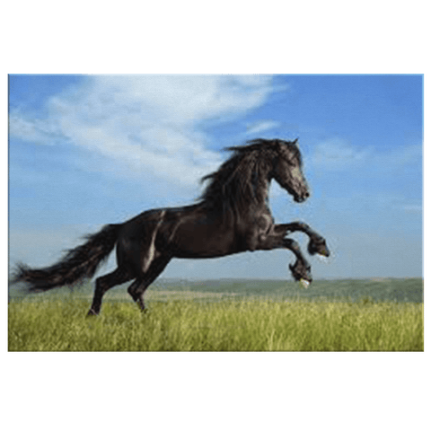 Black Horse Running on Green Grass Framed Canvas Photo Print