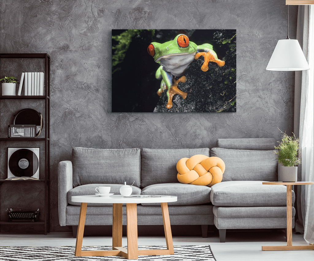 Red Eyed Green Tree Frog Photo Print on Framed Canvas Wall Art | Jungle Rain forest Animals Wildlife Photography Nature Wall Art
