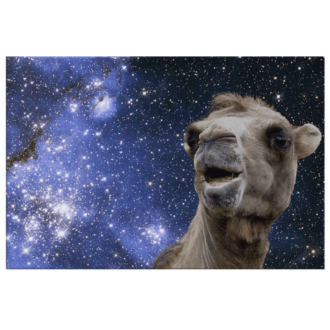 Funny Chewing Camel at Night Framed Canvas Photo Print