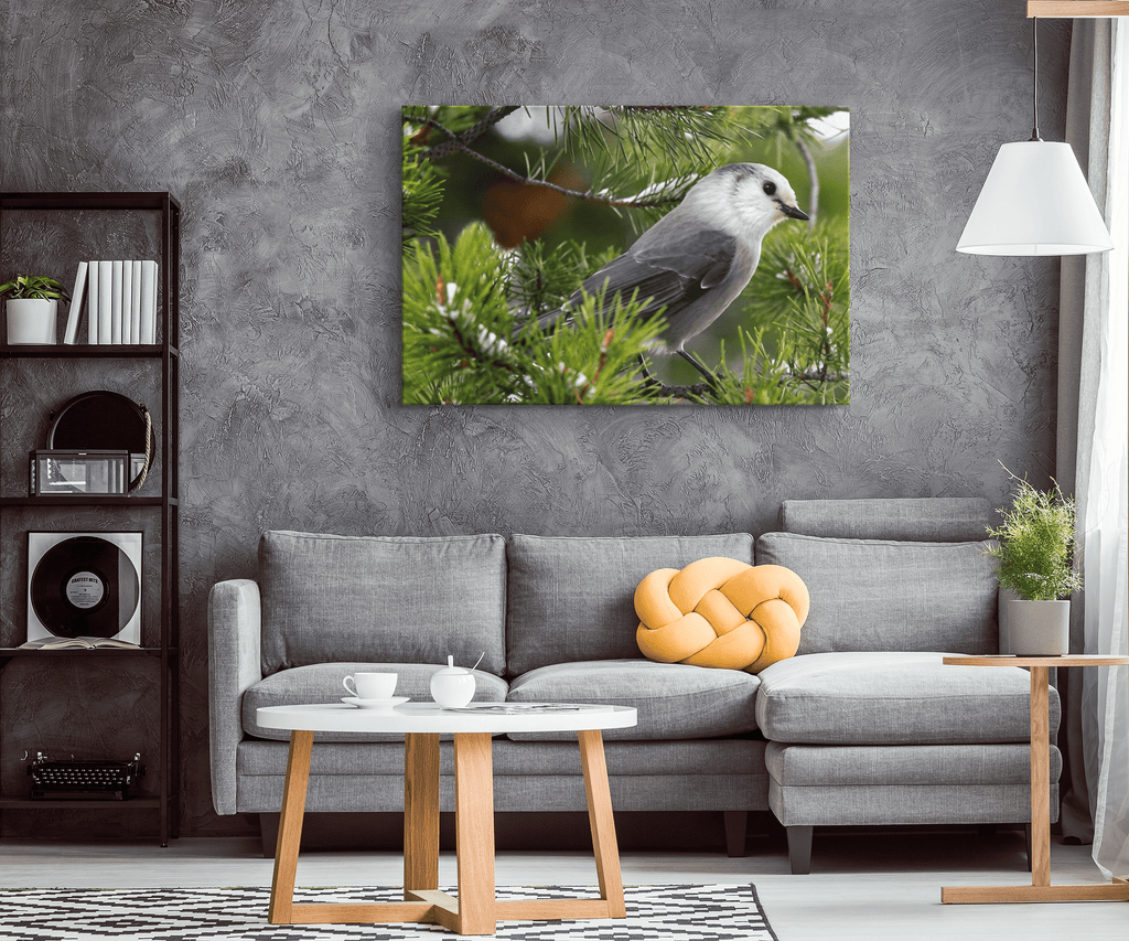 Gray Jay, Whiskey Jack Canada Jay Grey Jay Photo on Framed Canvas Wall Art Print | Wildlife Photography Bird Lodge Cabin Decor Ornithologist