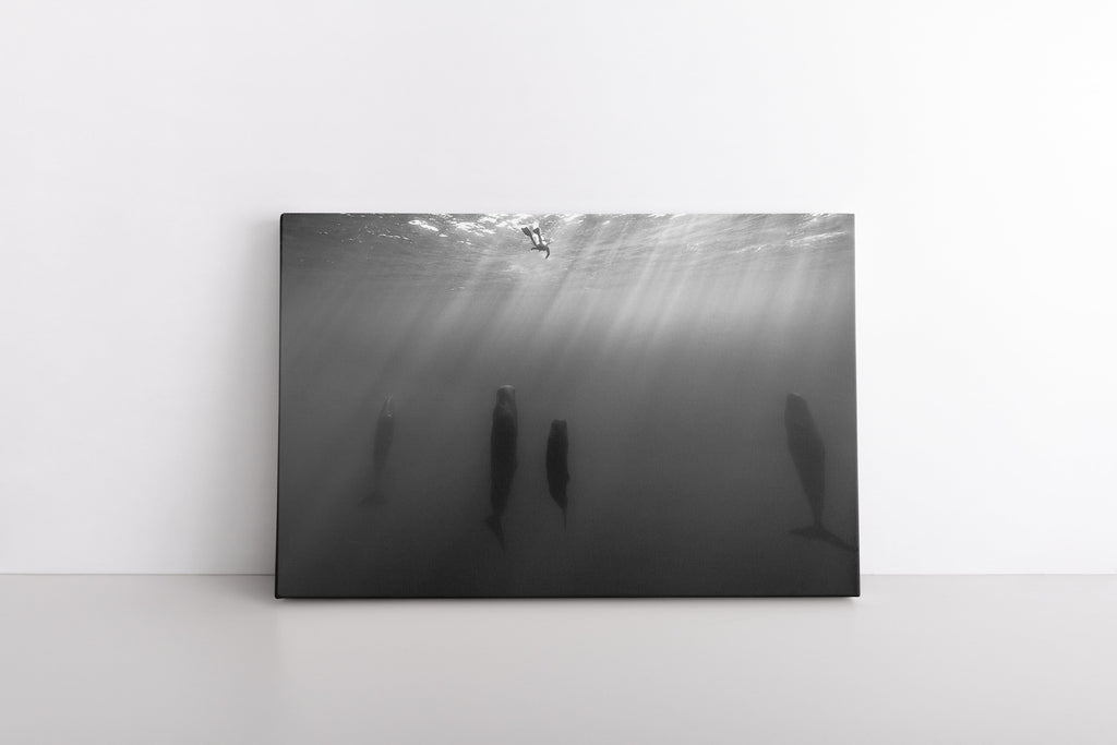 Diver with Whales Ocean Black and White Animals Wall Art Photo Print on Framed Canvas | Home Living Room Decor Minimalist Contemporary Humpback Whale