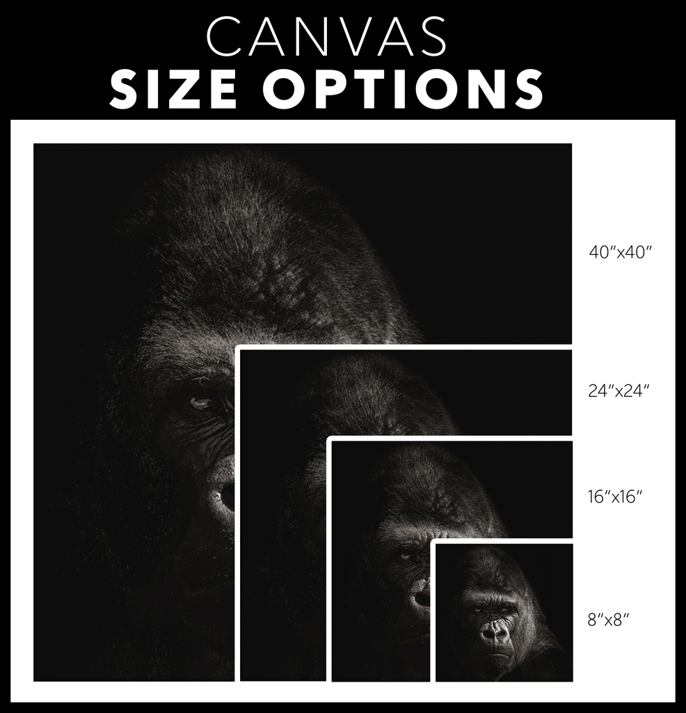 Black and White Silverback Gorilla Photo Print on Framed Canvas Wall Art Hanging | Modern Contemporary Minimalist Home Living Room Decor