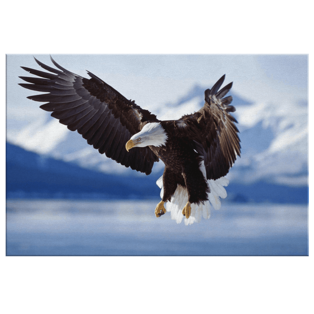 Landing Falcon Eagle Showing the Wings Framed Canvas Photo Print