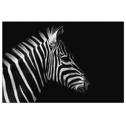 Black and White Zebra Safari Animal Framed Canvas Wall Art Photo Print | Modern Trendy Contemporary Minimalist Home Decor Living Room