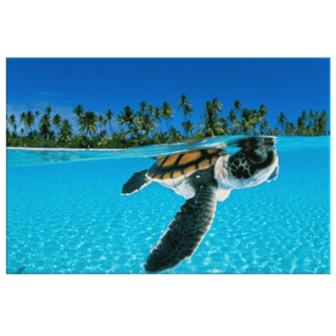 Baby Turtle Swimming at the top of Blue Sea Wave Framed Canvas Photo Print