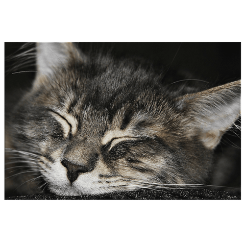 Kitten Sleeping Cute Kitty Black & White Cat Framed Canvas Photo Print | Cats Wall Art Decor