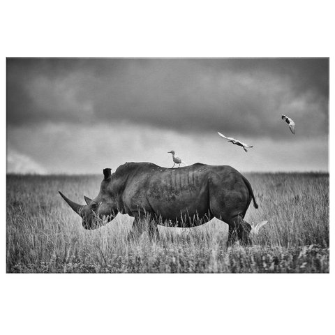 Black and White Rhino Safari Animal Photo Print | Framed Canvas Wall Art Decor Modern Trendy Minimalist Contemporary Living Room Decor