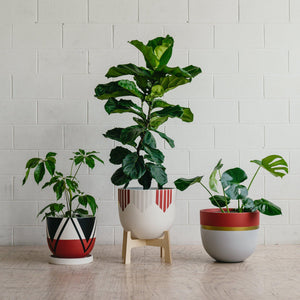 Medium Pot + Plant + Stand Package