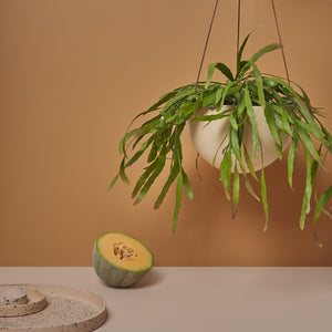 Block Colour Dome Hanging Planter - Salt by Capra Designs - Toast and honey studio
