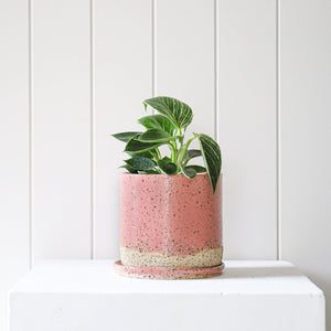 Medium Tall Planter Pink Style 1 by Mark Gambino - Toast and honey studio