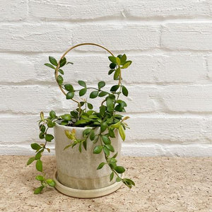 Plant stake mini circle in brass by Ivy Muse - Toast and honey studio