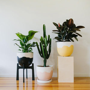 Sorbet Planter - Toast and honey studio