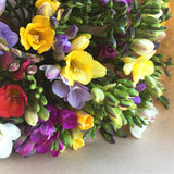 FRAGRANT FREESIA BUNCH