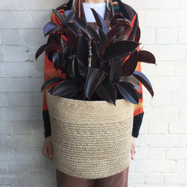 RUBBER PLANT IN JUTE BASKET