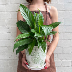 SPATHIPHYLLUM IN GREEN FLOWER POT
