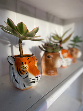 TIM THE TIGER PLANTER