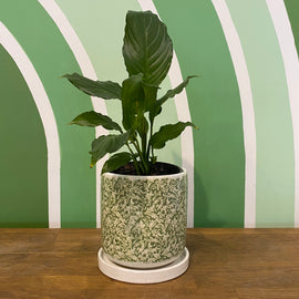 SPATHIPHYLLUM IN GREEN CRACKLE GLAZE POT