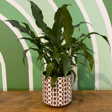 PEACE LILY (BROWN POT)