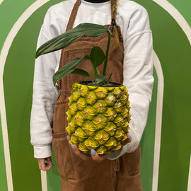 PINEAPPLE PLANTER