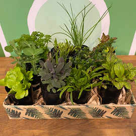 HERB & VEGGIE GIFT BOXES (PRE-ORDER FOR FRI 25th SEPT ONLY )