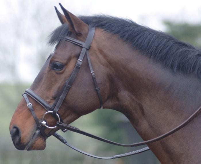 Oxford Bridle With Rubber Reins