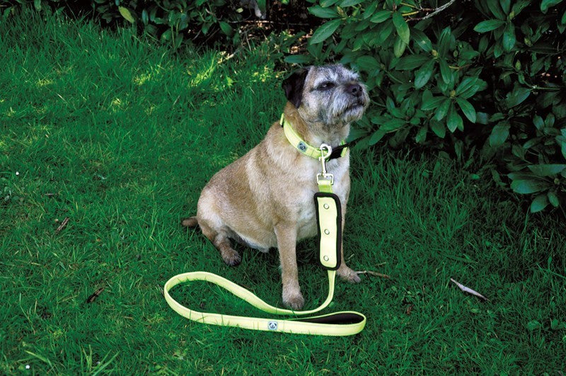 Woofmasta Flash Dog Lead