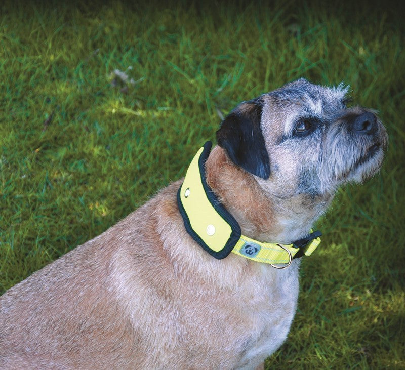 Woofmasta Flash Dog Collar