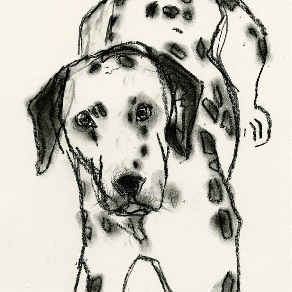 dot, dalmation - card & print