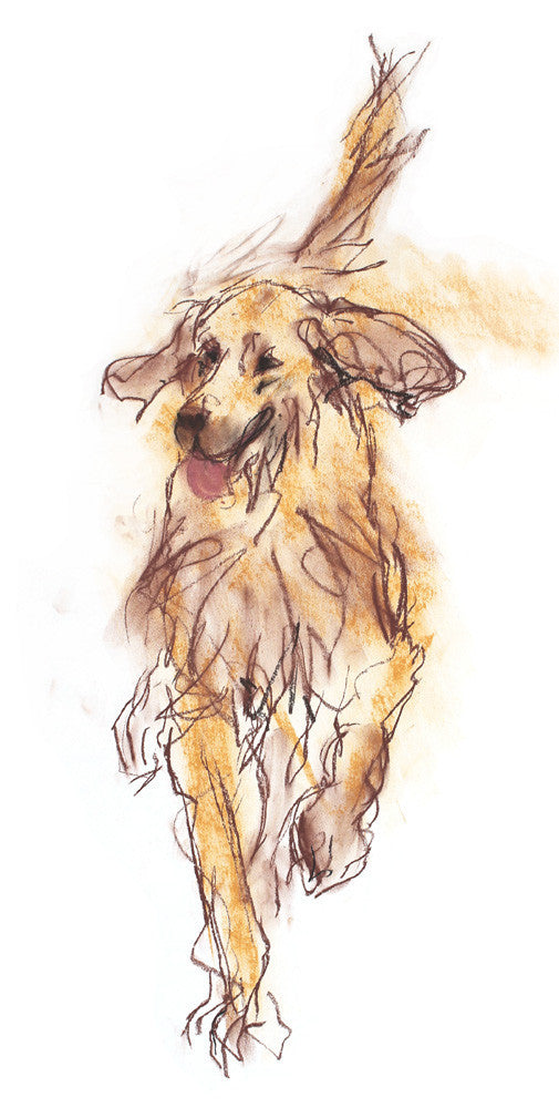 goldie, golden retriever - print